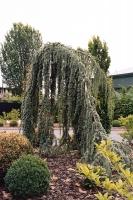 113_treesweb.jpg