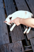 127_cat2019.jpg